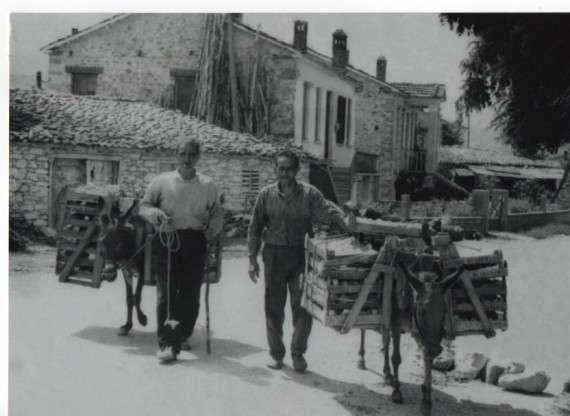 Αγρότες με γαϊδούρια φορτωμένα ροδάκινα στο παλιό Βελβεντό
