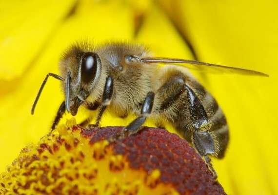 Η επιστημονική έκθεση με τίτλο «Αντίο Μέλισσες- Γιατί οι μέλισσες αφανίζονται και η διατροφή μας κινδυνεύει;» (1) που δημοσίευσε η Greenpeace, σηματοδοτεί την έναρξη της νέας πανευρωπαϊκής εκστρατείας για να προωθηθεί η βιώσιμη γεωργία που παράγει τροφή χωρίς τα επικίνδυνα χημικά των πολυεθνικών αγροτεχνολογίας.