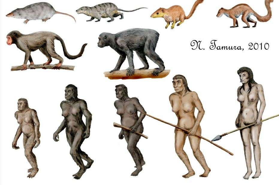 Η Θεωρία της Εξέλιξης στην Εκπαίδευση