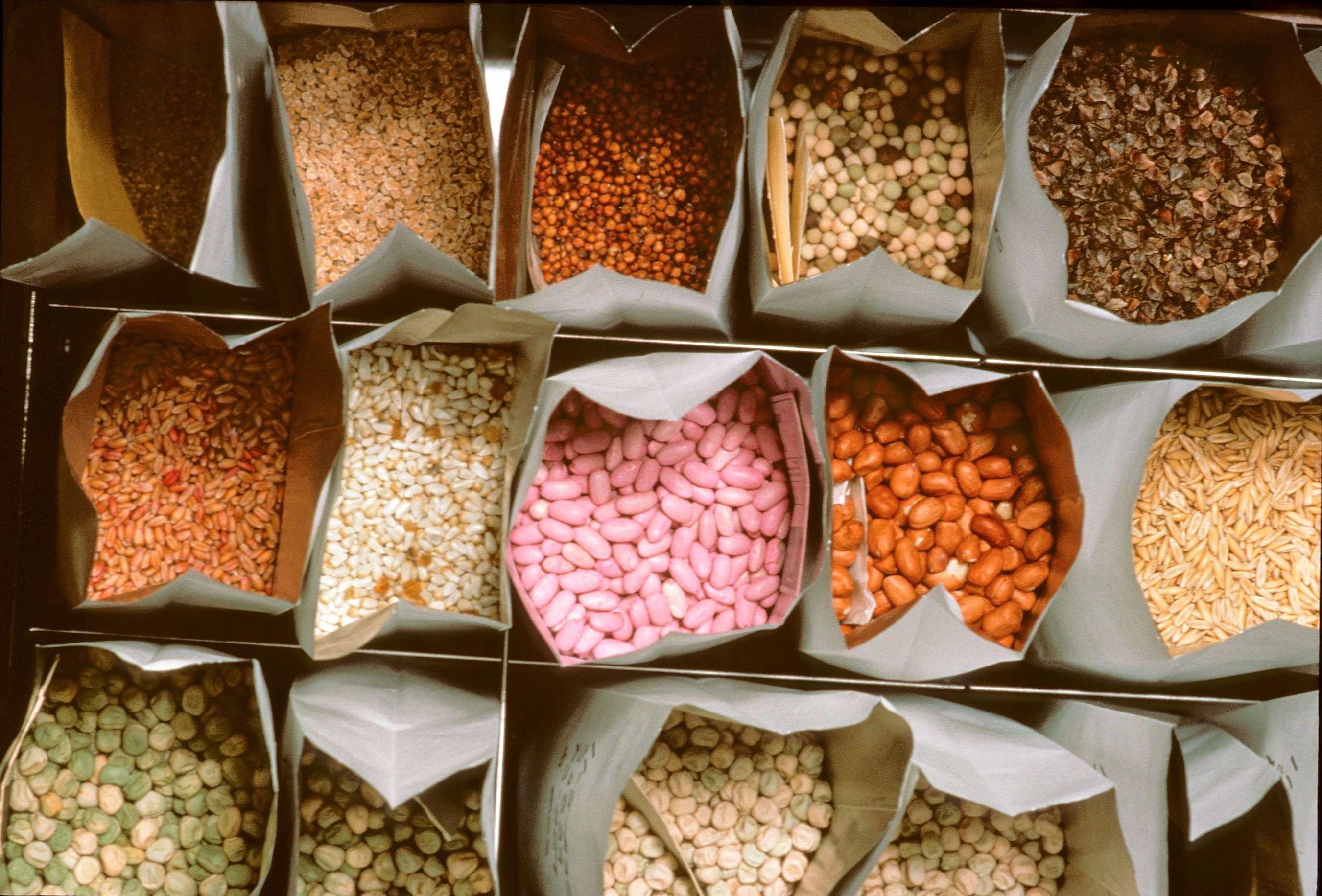 KOKOPELLI: Νέες διευκολύνσεις για τη βιομηχανία σπόρων;