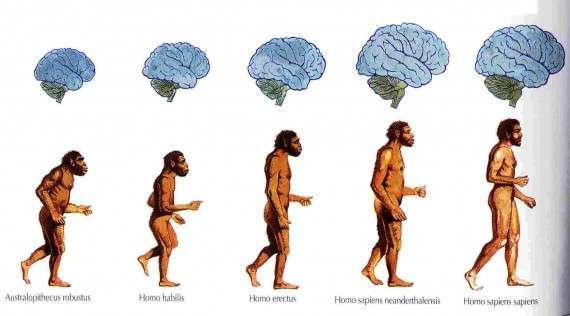 Η εξέλιξη του ανθρώπινου εγκεφάλου