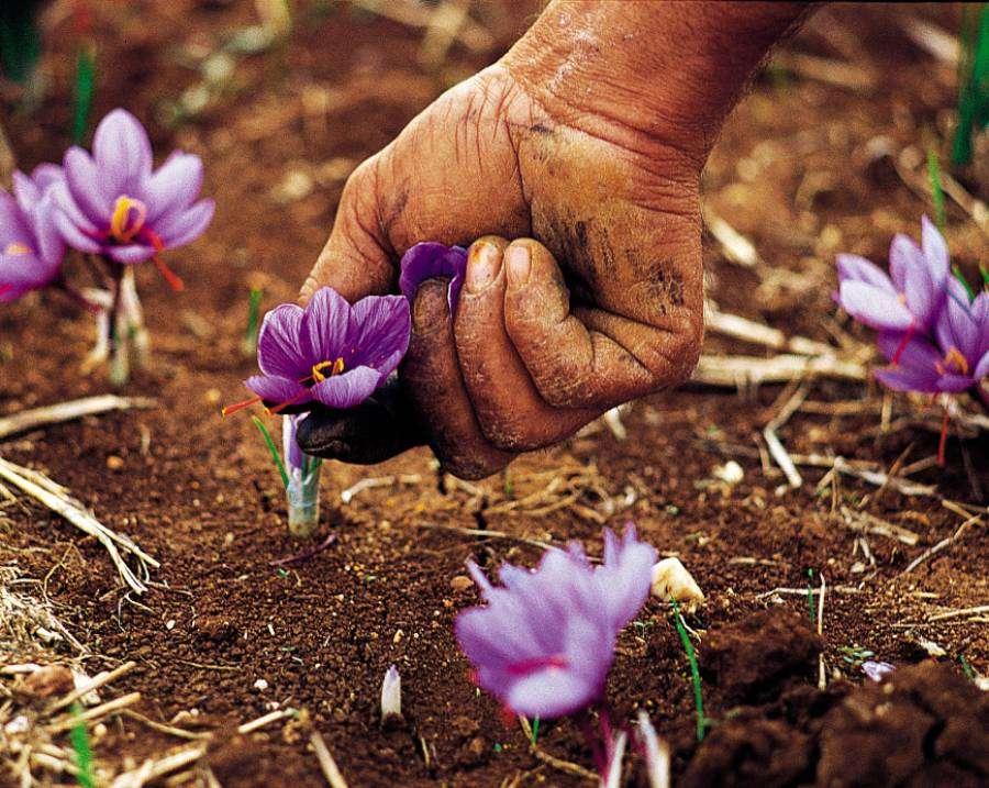 Διαλύεται η Τράπεζα διατήρησης της ελληνικής βιοποικιλότητας με νομοθετική πρωτοβουλία του υπουργείου Αγροτικής Ανάπτυξης και Τροφίμων
