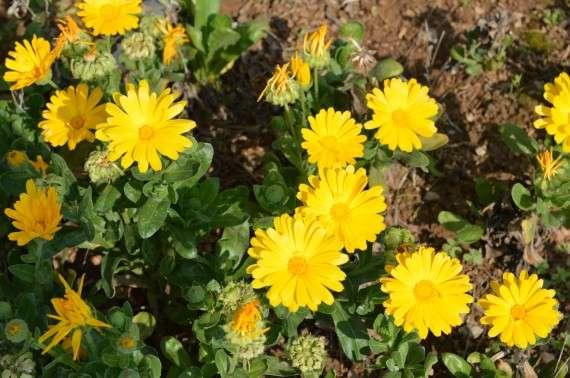 Λουλούδια της άνοιξης - Φωτογραφίες. Flowers spring - Photos