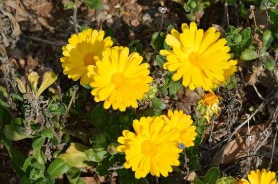 Λουλούδια της άνοιξης - Φωτογραφίες