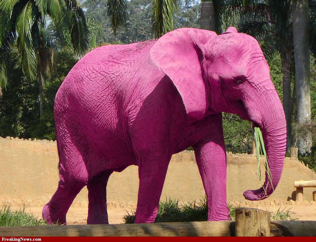 Ροζ ελέφαντας