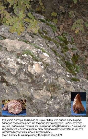 Νόστιμο Καστοριάς-απολιθωμένο δάσος