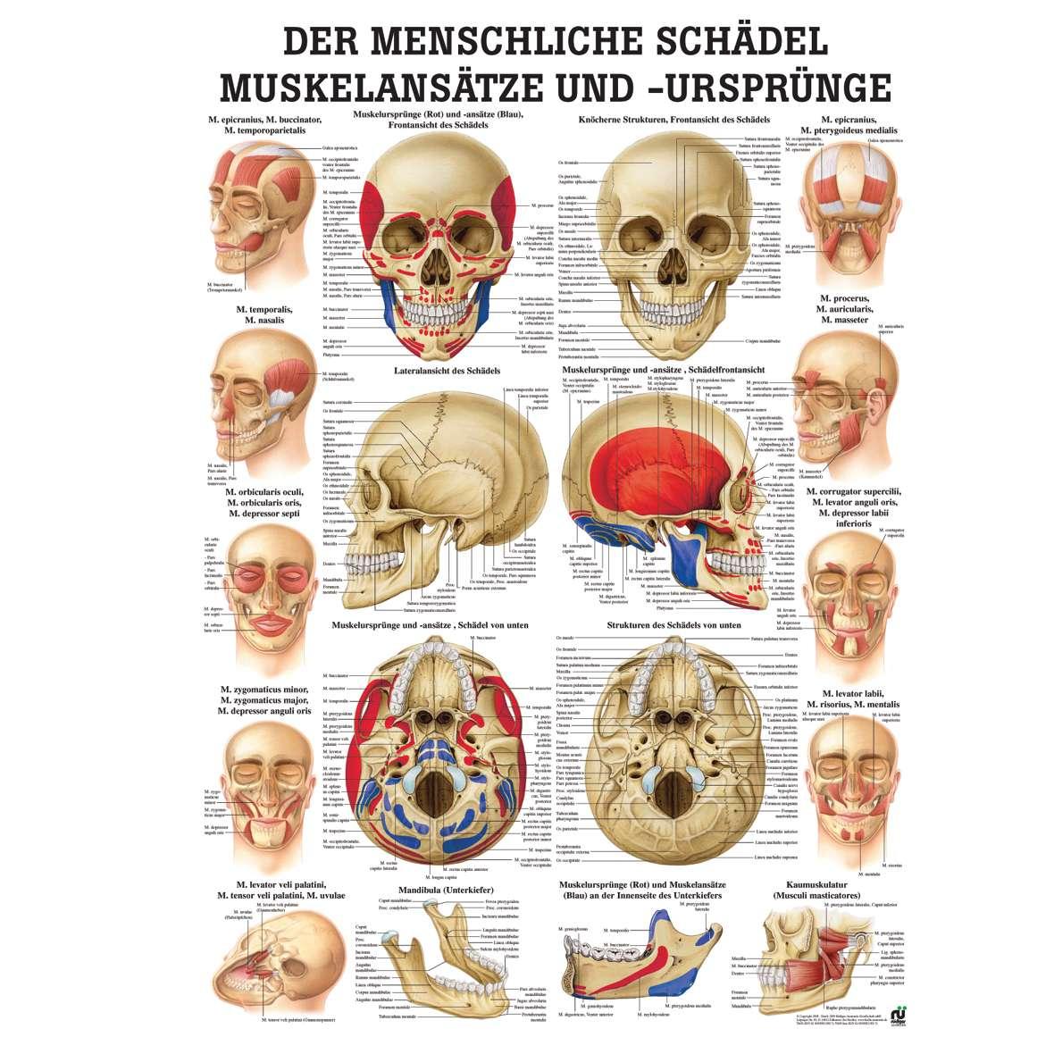 """Φυσική ανθρωπολογία, αρχαιολογία και βιοπολιτική: η περίπτωση της """"Καταγωγής των Kρητών"""" – του Άρη Πουλιανού"""