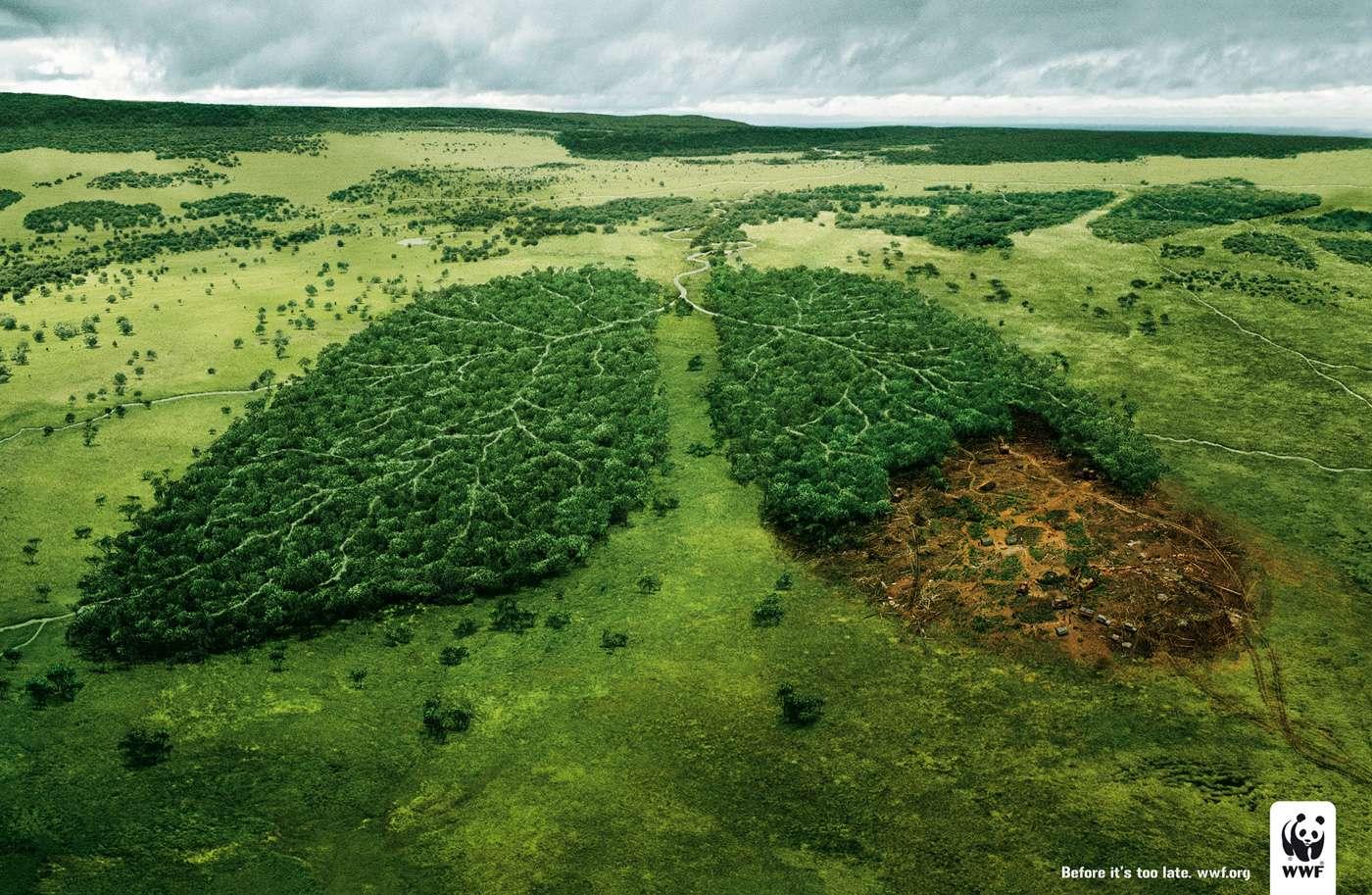 Νομιμοποίηση καταπατημένων εκτάσεων, άρση του αναδασωτέου χαρακτήρα καμένων εκτάσεων εντός πενταετίας, fast track αποχαρακτηρισμοί δασικών εκτάσεων (και ένταξή τους στον χωροταξικό σχεδιασμό), δασικοί χάρτες άνευ νοήματος, καθώς θα βρίσκονται πλέον υπό διαρκή αναδιαμόρφωση.Αφίσα του WWF
