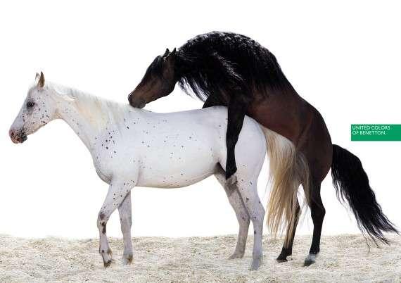 Άλογα σε διαφήμιση της Benetton