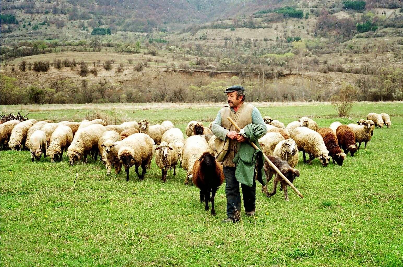 Με άλλα λόγια, οι κτηνοτρόφοι προτείνονται ως δεύτερη καταλληλότερη πληθυσμιακή ομάδα για την εγκαθίδρυση της ιδανικής δημοκρατίας, επειδή συμμετέχουν στην εκκλησία του δήμου