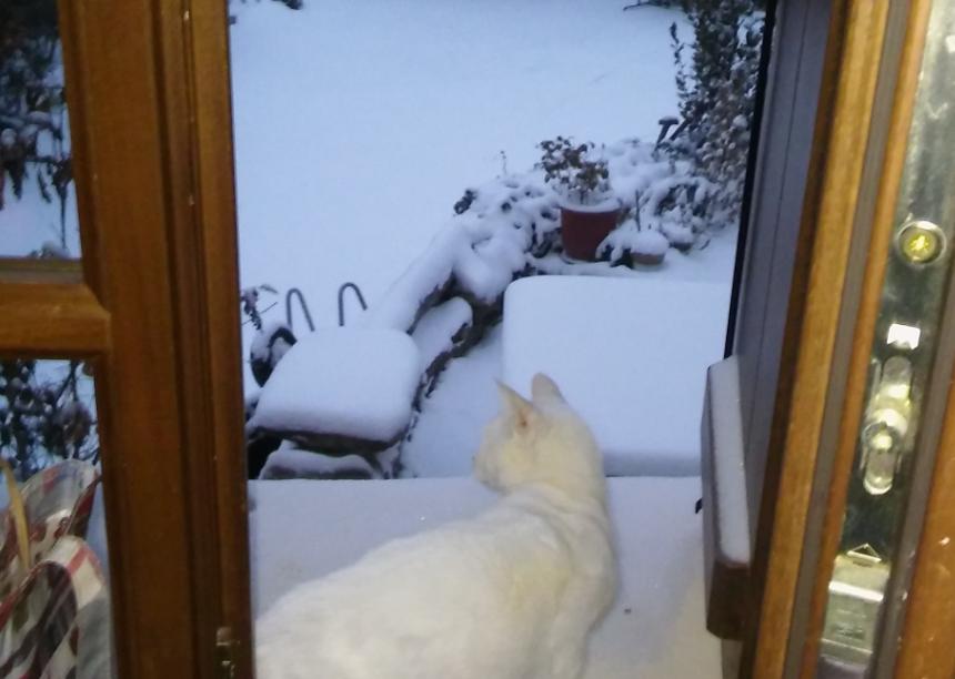 γάτα και χιόνι