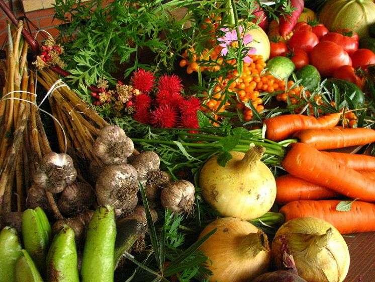 Μονοκαλλιέργειες καρπουζιών, καπνού, καλαμποκιού και κυρίως βάμβακος ισοπεδώνουν κάθε σπιθαμή της γης.