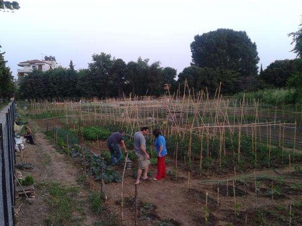 Δίκτυο συνεργατικών λαχανόκηπων εξασφαλίζει τροφή σε 240 οικογένειες
