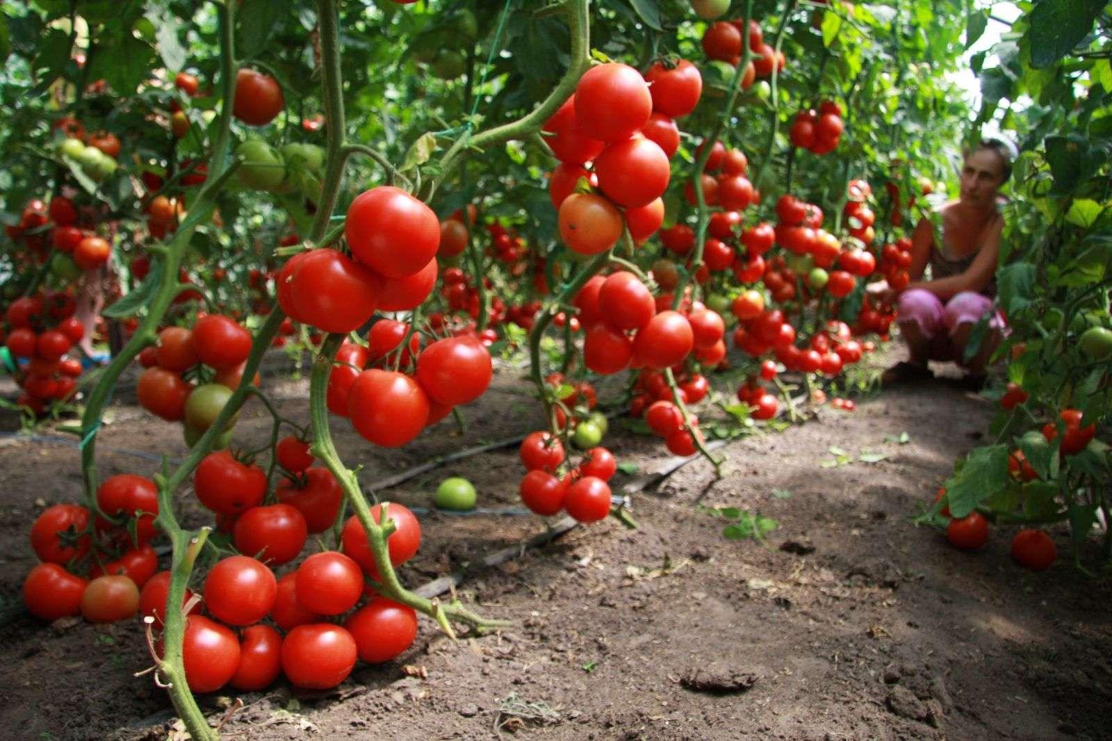Κατεβάστε: 51 δωρεάν βιβλία για τις καλλιέργειες (λαχανικά, βότανα, δέντρα)