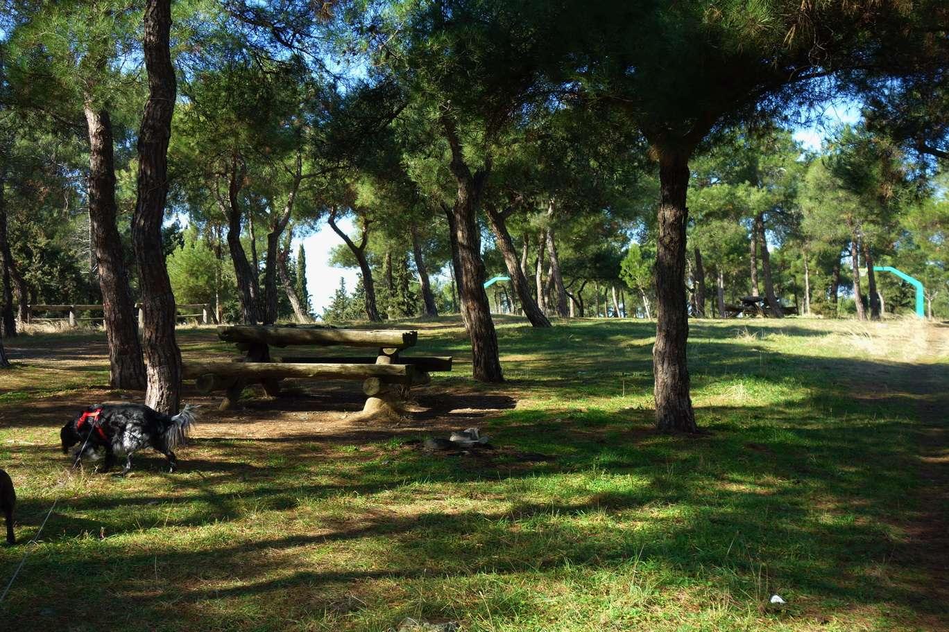 Δάσος του Κεδρηνού Λόφου: Ένα φυσικό οικοσύστημα δημιουργημένο από τον άνθρωπο