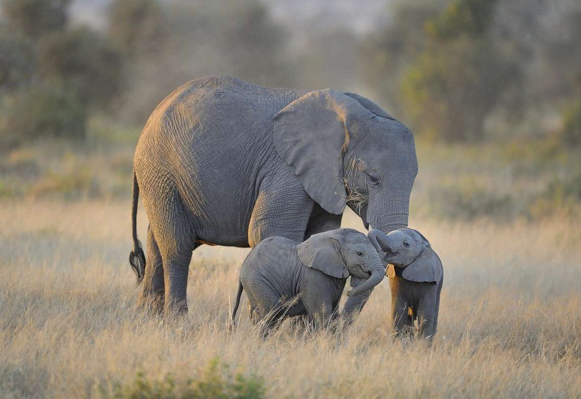 Τα μεγαλύτερα ζώα, αυτά που αποκαλούνται ως «μεγαπανίδα» και περιλαμβάνουν τους ελέφαντες, τους ρινόκερους και τις πολικές αρκούδες, είναι εκείνα που εμφανίζουν τη μεγαλύτερη μείωση, μία τάση που υπήρχε και στις προηγούμενες φάσεις μαζικής εξαφάνισης ειδών.