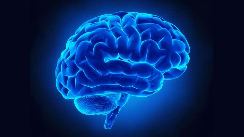 Δεν χρειάζεται να είναι κανείς επιστήμονας για να γνωρίζει ότι ο εγκέφαλός μας έχει όψη που παραπέμπει σε καρύδι: διαθέτει δύο ημισφαίρια και η επιφάνειά του δεν είναι λεία, αλλά αυλακώνεται από μικρές χαράδρες οι οποίες δημιουργούνται κατά τη διάρκεια της εμβρυογένεσης.