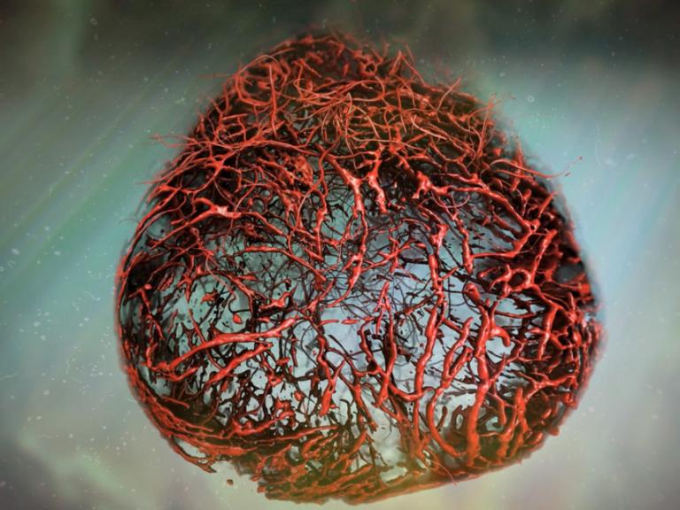 Επιστήμονες ανακοίνωσαν ότι κατάφεραν πρώτη φορά να αναπτύξουν στο εργαστήριο τέλεια ανθρώπινα αιμοφόρα αγγεία.