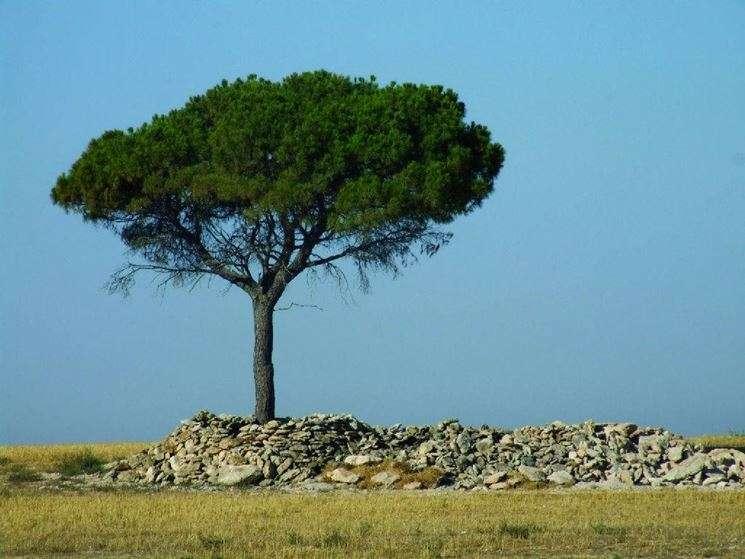 Οι φυτευτές εκείνοι έφτιαξαν πίλους πρασίνου πάνω από (σχεδόν) κάθε ελληνική πόλη, από κωμόπολη και χωριό, που βρισκόταν σε λόφο ή πλαγιά, έφτιαξαν δάση περιαστικά, άλση μέσα στις ξηρές ελληνικές πόλεις, που αποτέλεσαν οάσεις–καταφύγια ζωής για τους κατοίκους τους.