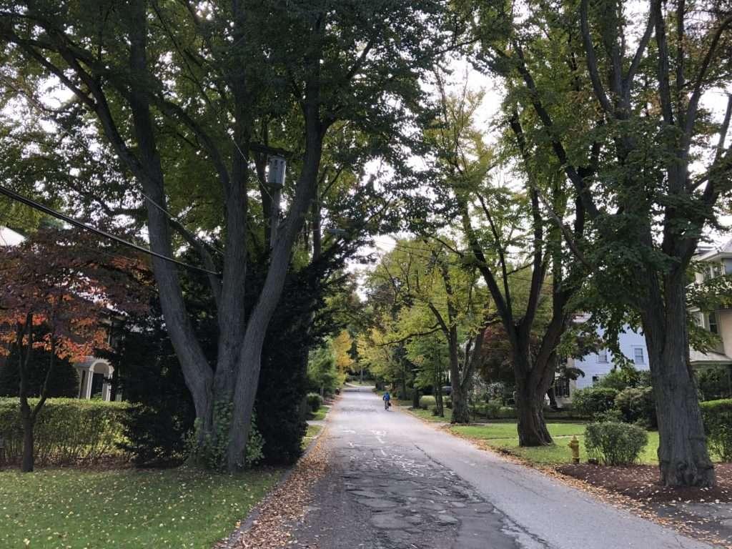 Παρατηρώντας τη σημασία των δέντρων για τη ζωή, αντιλαμβανόμαστε ότι είναι σημαντικά και ευεργετικά για τον άνθρωπο με πολλούς τρόπους.