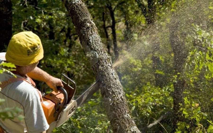 Ποιοι να πάμε στο δάσος; Άνθρωποι που κάποιοι κυριολεκτικά δεν έχουν ξαναπατήσει σε χώμα; Που δεν έχουν την παραμικρή εμπειρία σε χειρωνακτική εργασία;