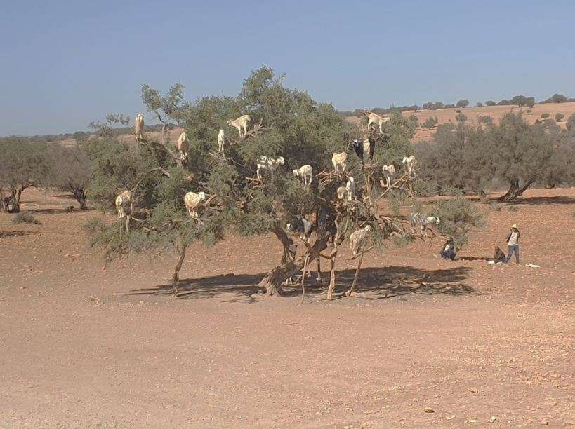 Μαρόκο