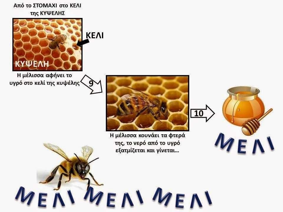 Πώς φτιάχνεται το μέλι