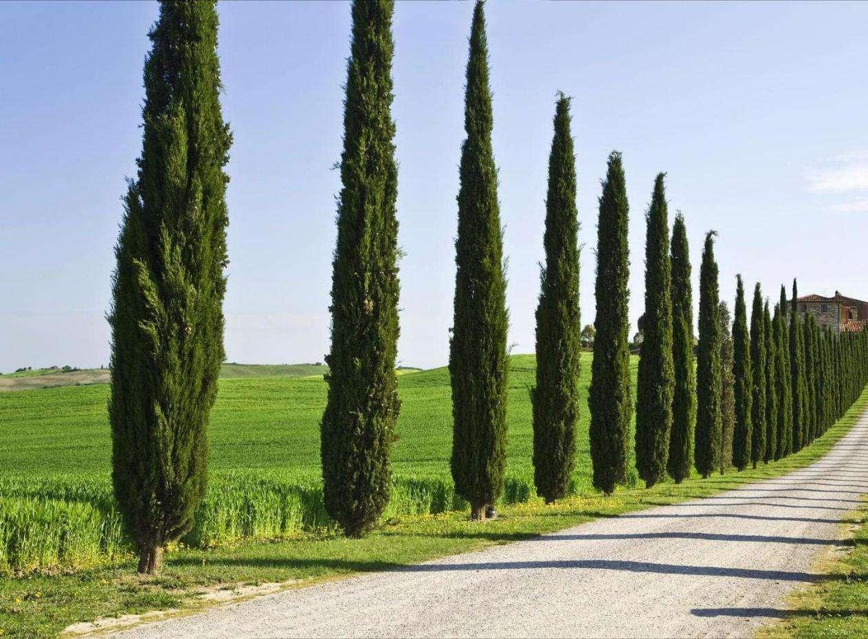 Το κυπαρίσσι είναι δένδρο χρησιμότατο για την οικοδομήσιμη ξυλεία του που πουλιέται ακριβότερα γιατί είναι πολύ στερεή. Τα ξερικά κυπαρίσσια και όσα είναι απάνω σε βράχια μεγαλώνουν αργά, μα έχουν ξύλο που δεν σαπίζει και μπορεί να κράτηση 300-600 χρόνια όταν δεν βρέχεται.