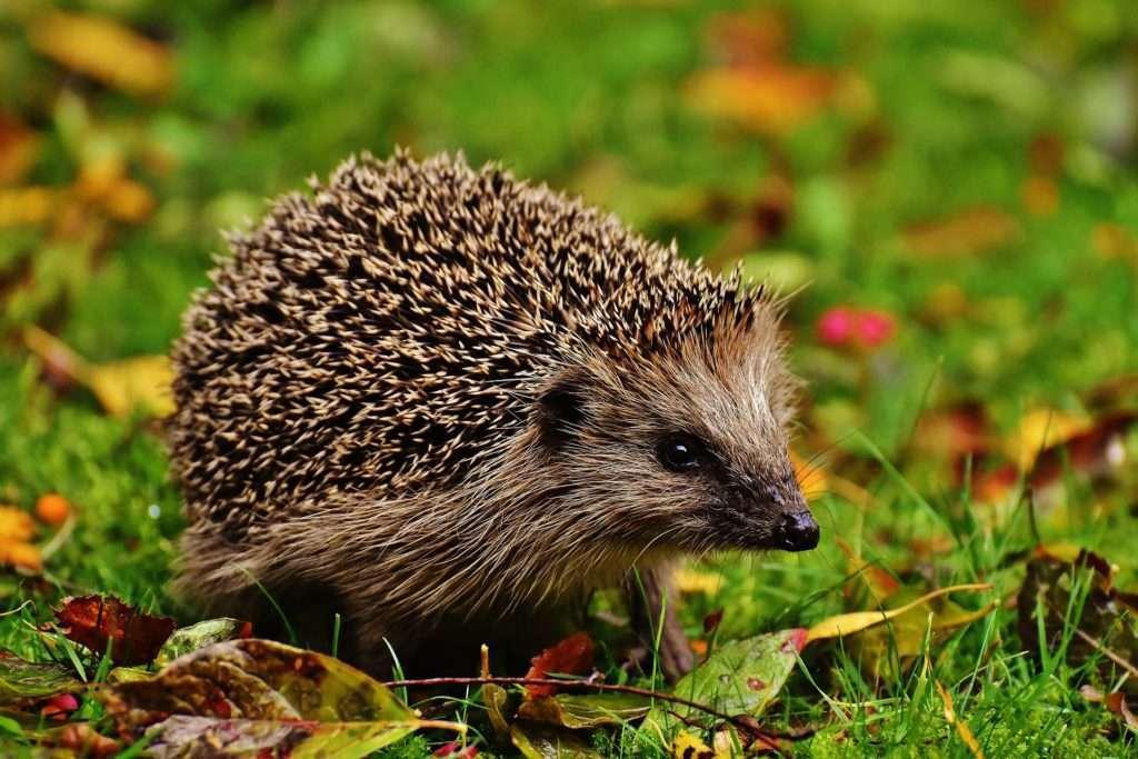 Στο παρελθόν πολλοί ερευνητές είχαν επισημάνει ότι δεν έχει μελετηθεί ικανοποιητικά το ιϊκό φορτίο σε πολλά είδη νυχτερίδων αλλά και θηλαστικών (χοίροι, άλογα, ερίφια, σκατζόχοιροι, κουνάβια, κατοικίδια και οικόσιτα ζώα, κ.α.) και άλλων ειδών που είναι ενδιάμεσοι ξενιστές των κοροναϊών παρότι ο κίνδυνος μιας νέας επιδημίας ήταν πιθανός.