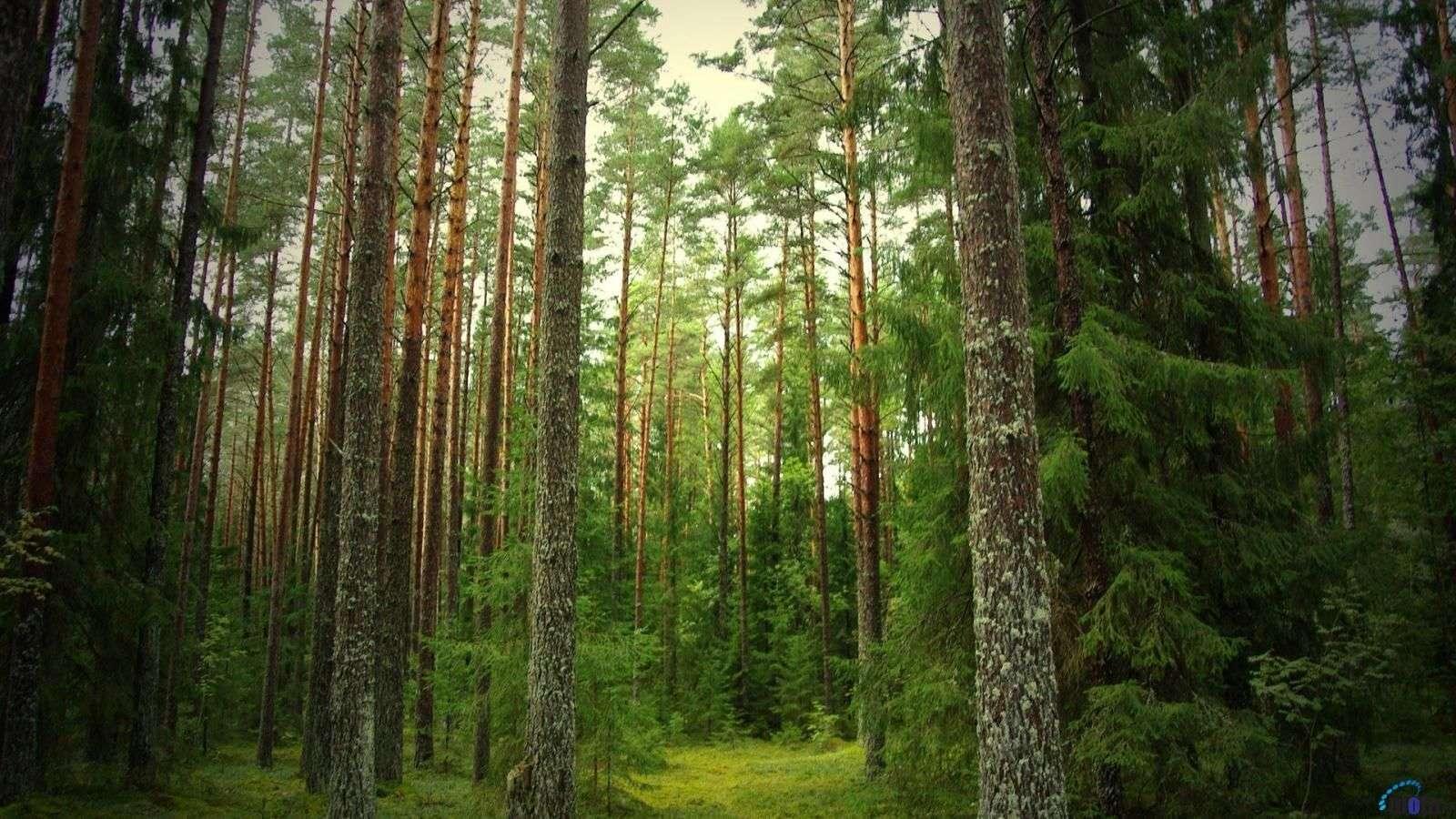 Η νεολιθική γεωργική επανάσταση απαιτούσε φωτιά για να αλλάξει τη φυσική βλάστηση από αιώνια τοπία σε ετήσιας βλάστησης κυριαρχούμενα τοπία. Έχει υποστηριχθεί ότι οι άνθρωποι προτιμούσαν να ζουν σε μέρη που είναι επιρρεπή σε πυρκαγιές,