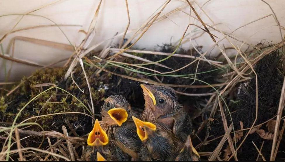 Ένα πουλ' έκαμε φωλιά στης λεϊμονιάς το φύλλο