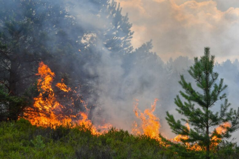 Η δημιουργία ενός δικτύου πυροφυλακίων έγκαιρης προειδοποίησης έναρξης πυρκαγιών, στελεχωμένο για παράδειγμα από φοιτητές, μπορεί να συμβάλει σημαντικά στην έγκαιρη αντιμετώπισή τους.