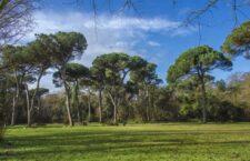 Αρχικά να διευκρινίσουμε ότι όταν ο κόσμος αναφέρεται στα «πευκοδάση»εννοεί τα δάση της χαλεπίου και της τραχείας πεύκης.